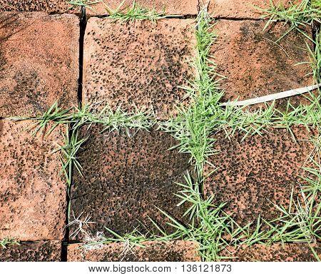 grunge orange brick block with grass growth between cleft of brick block.