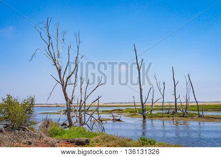 Huntington Beach California Wetlands