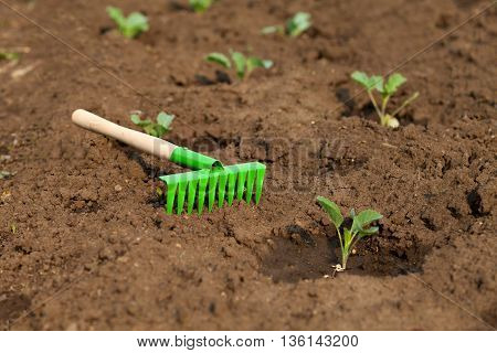 Little green rakes for the garden on a bed with cabbage. Garden Care.
