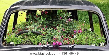 A used car is full grown flowers