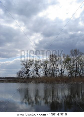 Trees on a background cloudy sky reflected in the water.