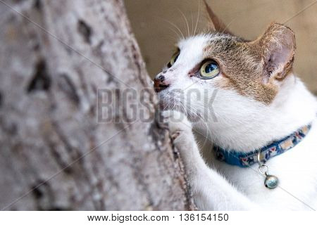 street cat with her eye focusing on her prey