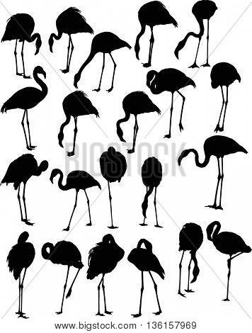 illustration with set of twenty one flamingo silhouettes isolated on white background