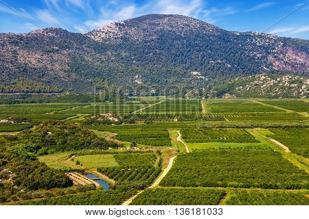 View of a vineyard in Dalmatia Croatia.