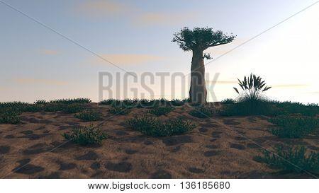 3d illustration of the Madagascar baobab in sunset lights