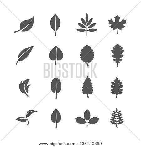 Leaves vector icons set. Leaf natural icon, sign leaf eco, organic leaf illustration