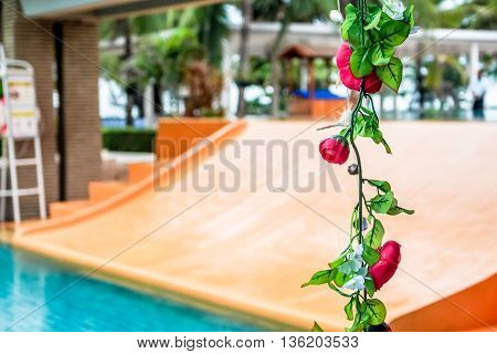 line of vertical rose flower with swimming slider as a background