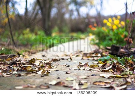 Autumn path in garden. Fallen leaves are on a ground