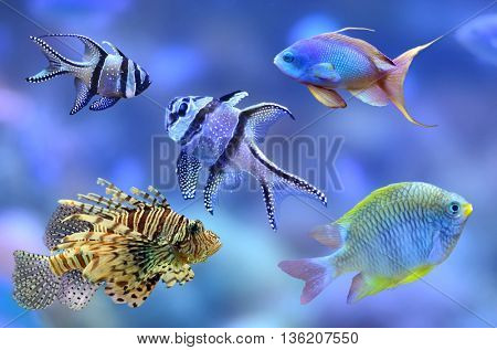 Different fish from coral reef. Path for all fish.