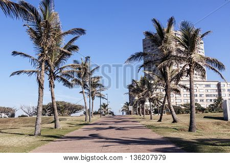 Palm Trees And Paved Walkway Lead Toward Residential Complex