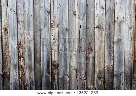 Background wood The old and classic in itself. Beautiful attractive Consists of a dry tree Based at the bottom of a wooden background. Create a warm strong and powerful suitable for use as a background in any form.