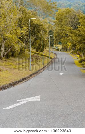 Pedestrian walkway for exercise lined up with beautiful tall trees