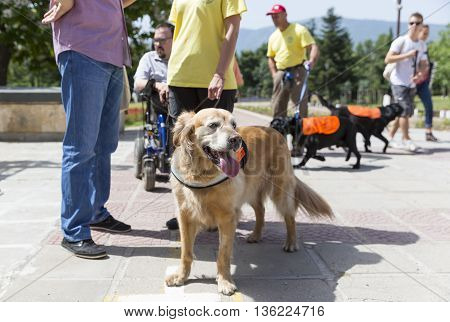 Guide And Assistance Dogs