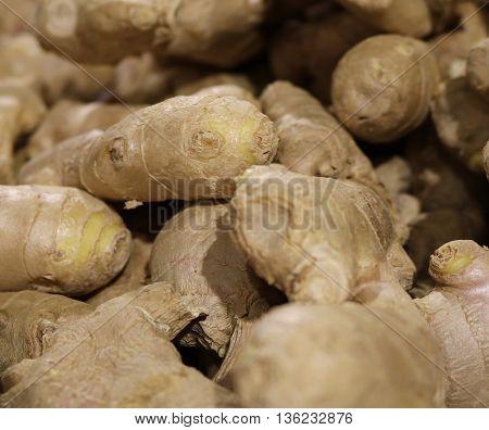 Ginger rhizome medicinal plants for cooking flavor