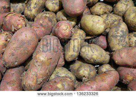 Potato tuber or nightshade (Solanum tuberosum), - tuberous herbaceous plant food