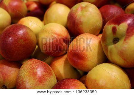 Peach, Persian plum - plant fruit akin to almonds
