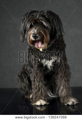 dark mutt dog sitting in dark studio