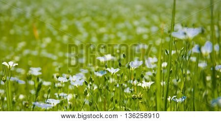 Beautiful Linen Flowers Background
