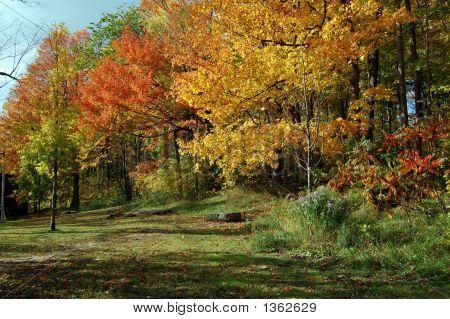 Autumn Scene 7