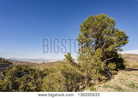 San Bernardino National Forest, Californira