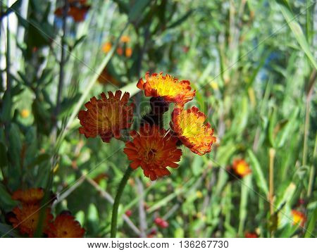 Cluster of tiny orange wildflowers nature scenic