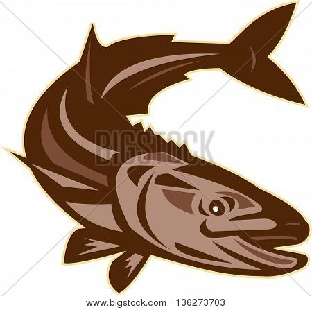 Illustration of a cobia (Rachycentron canadum) or black kingfish black salmon ling lemonfish crabeater prodigal son black bonito aruan tasek achycentron canadum diving down viewed from front set on isolated white background done in retro style.
