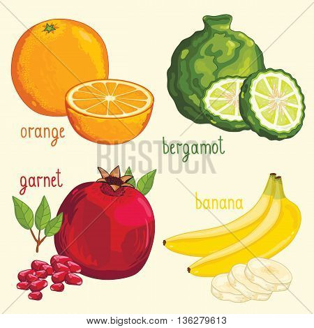 Set of fruits mix vector isolated. Orange, bergamot, pomegranate and banana fruits. Natural organic food. Ingredients for fruits salad. Sweet and ripe summer fruits. Isolated orange, bergamot, pomegranate and banana.