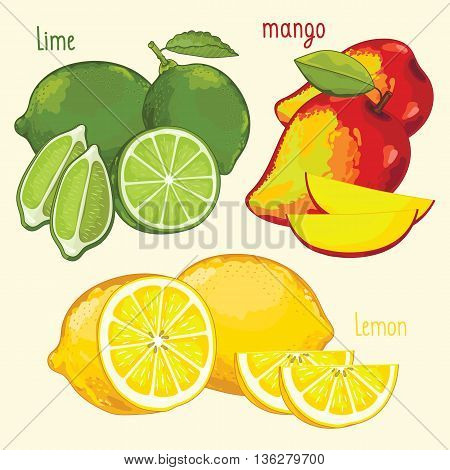 Set of fruits mix vector isolated. Lime, mango and lemon fruits. Natural organic food. Ingredients for fruits salad. Sweet and ripe summer fruits. Isolated lime, mango, lemon fruits. Half of mango, lime, lemon.