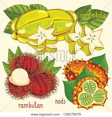 Set of fruit mix vector isolated. Healthy eat. Carambola, rambutan and nods fruit. Natural organic food. Ingredients for a vegetarian meal. Sweet and ripe tropical summer fruit.