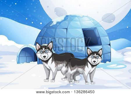 Syberian dogs and igloo illustration