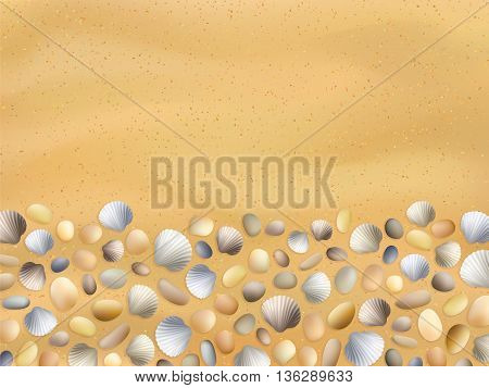 Sea stones on the sand. Shells. Vector seashore. Summer background. Ocean sand texture. Seashore illustration. Tropical seashells. Beach surface.
