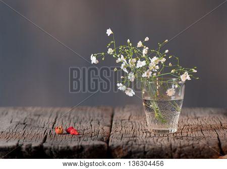 White Elegant Gypsophila.