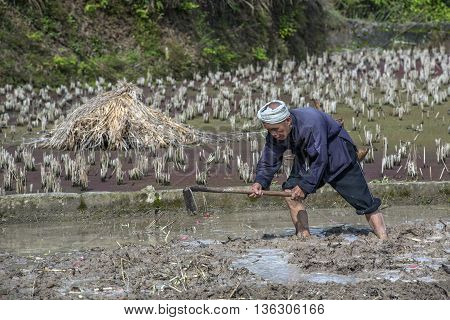 Zhaoxing Dong Village Guizhou Province China - April 8 2010: Cultivated land Asian farmer cultivates the soil in a flooded rice field with water using a hand hoe morning spring.