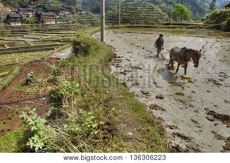 Zhaoxing Dong Village Guizhou Province China - April 8 2010: Chinese farmer tills the ground to the flooded rice field near a mountain village using the power of the horse that pulls the plow.