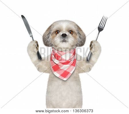 dog wants to eat and hold knife and fork -- isolated on white