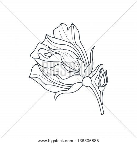 Rose Bud Monochome Drawing For Coloring Book Hand Drawn Vector Simple Style Illustration