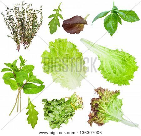Set Of Fresh Salad Leaves Isolated On White