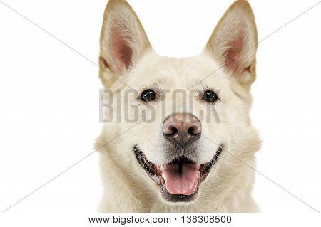 Smilie Face Dog Portrait In White Studio