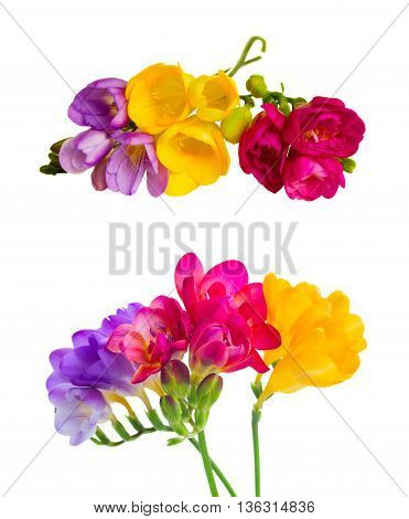 Set of yelow, pink and violet pink freesia flowers with buds twig isolated on white background
