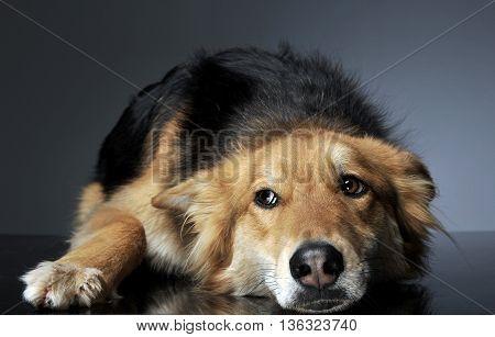 Mixed Breed Dog Looking Sideway In A Relaxing Floor Studio