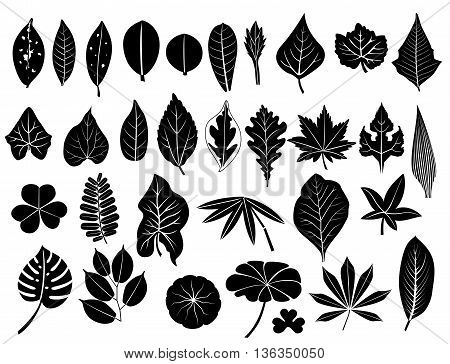 silhouette leaves vector set grape acacia fern elm poplar oak maple lush bamboo cassava teak pennywort tamarind lotus caladium for decoration and design