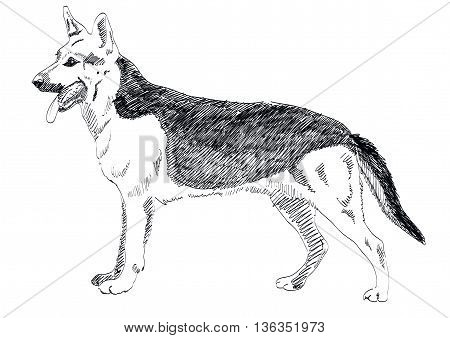 German Shepherd hand drawn vector isolated on white background. EPS