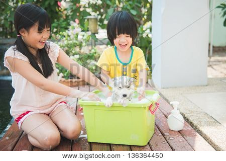 Asian children wash siberian husky puppy in the basin on the summer