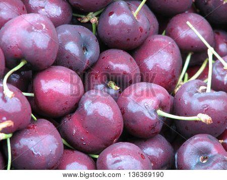 Farm fresh bing cherries at a farm stand.