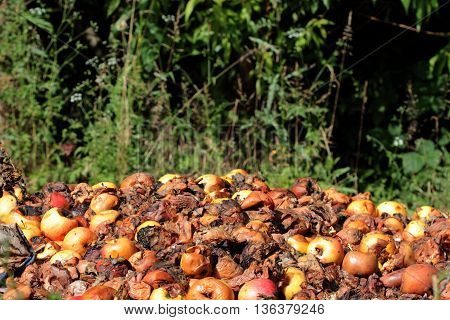 icture of a Rotten apples.organic pollution concept