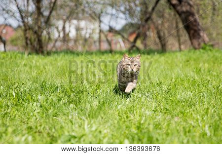 Cute cat on the green lawn at sunny day