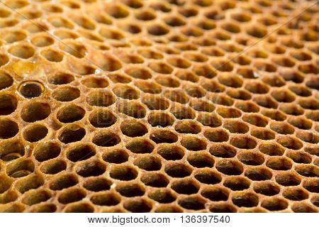 Culled brood comb from ongoing honey bee hive maintenance.