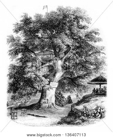 Sceaux environment, The Chestnut by Robinson, vintage engraved illustration. Magasin Pittoresque 1852.