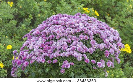 Flower arrangement in summery garden in Finland