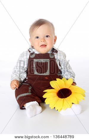 little childe in browne overalls sitting on the fur in a full-length with sunflowers in his hands, white background isolated